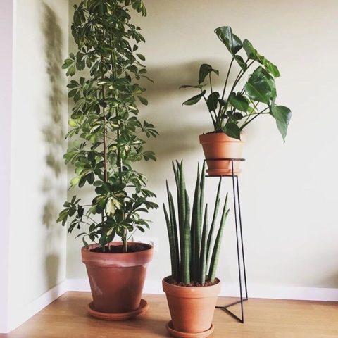 rood-bloem-styling-huis-groen-planten-utrecht-1