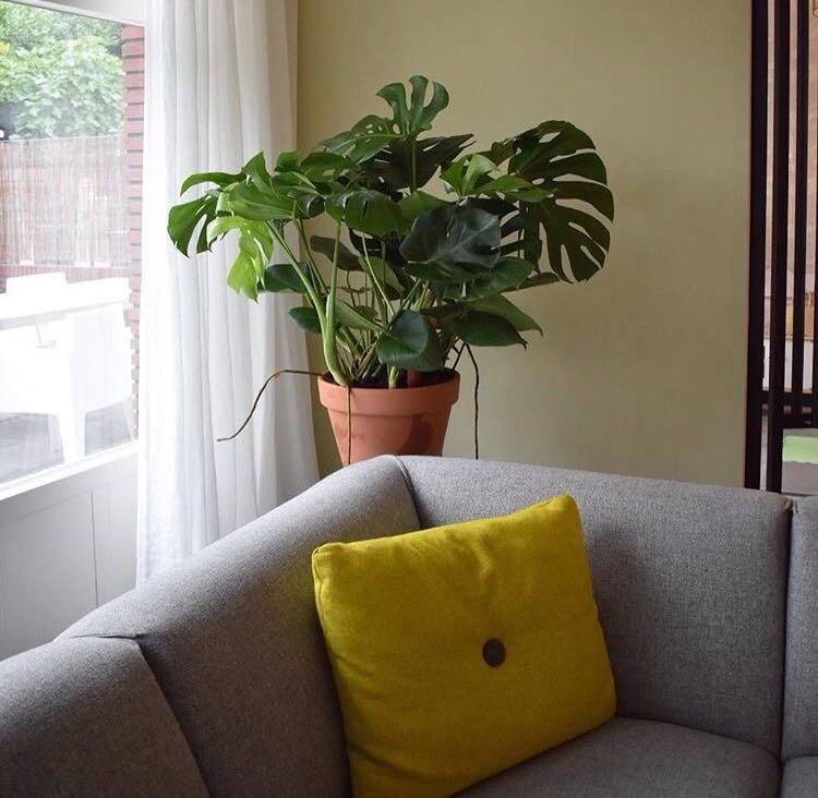 rood-bloem-styling-huis-groen-planten-utrecht-2