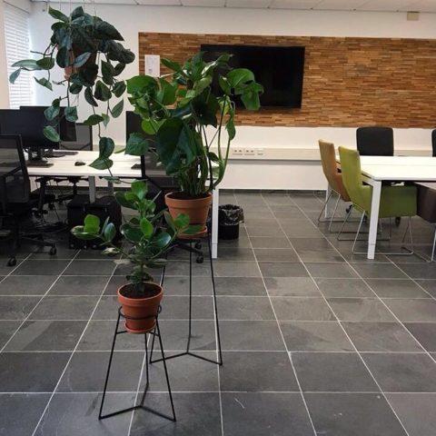 rood-bloem-styling-kantoor-groen-planten-amsterdam-1