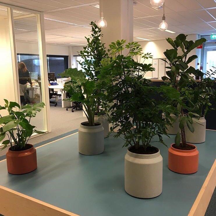 rood-bloem-styling-kantoor-groen-planten-amsterdam-2