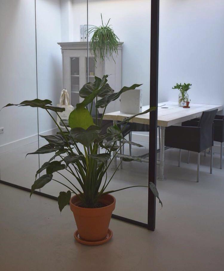 rood-bloem-styling-kantoor-groen-planten-utrecht-3