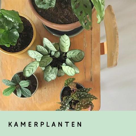 rood-bloem-utrecth-workshop-cursus-kamerplanten-verzorgen-groene-planten